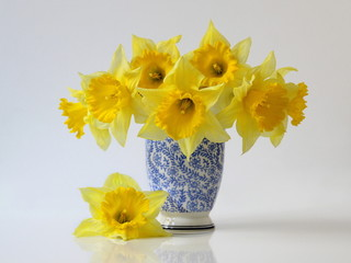 Bouquet of spring daffodils flowers in a blue vase. Bouquet of yellow narcissus flowers in a blue vase. Floral home still life.