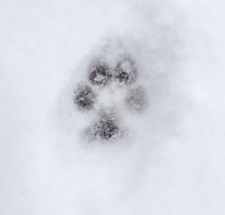 animal footprint on white snow