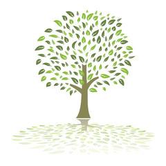 green summer tree vector