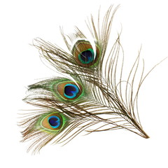 Beautiful peacock feathers on white background