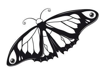 Butterfly Outlines Ausmalbild Schmetterling