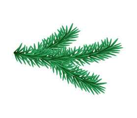 Green lush spruce branch. Fir branches. Isolated illustration in vector format