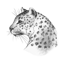Leopard's head . Watercolor sketch 1. Isolated on white background