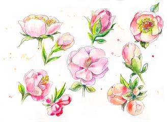 Sakura watercolor buds. Set of watercolor cherry blossom. Pink w