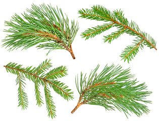 Fir and pine trees branches isolated on white with clipping path