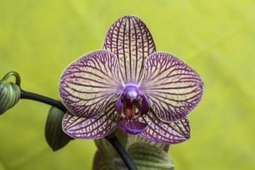 fiore di orchidea viola e gialla