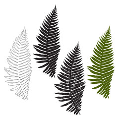 Fern, isolated elements for design on a white background. Vector illustration.