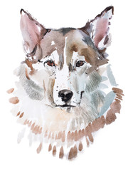 aquarelle painting of grey dog head, wolf's face watercolor drawing