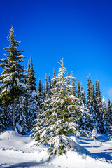 Wall Mural - Christmas decorations on a fir tree in the forest on the ski slopes at Sun Peaks in the Shuswap Highlands in central British Columbia
