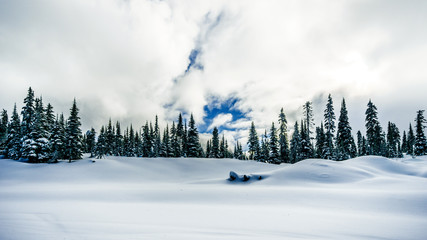 Wall Mural - Deep snow pack and snow covered trees in the high alpine at the village of Sun Peaks in the Shuswap Highlands in central British Columbia