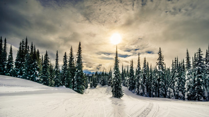 Wall Mural - Sunset over the forest on the ski hills at the village of Sun Peaks in the Shuswap Highlands in central British Columbia