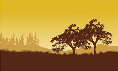 silhouette of tree with yellow backgrounds