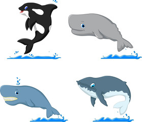 cute dolphin and sharks cartoon