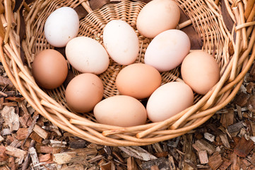 High angle view of farm fresh eggs in a wicker basket (cropped)
