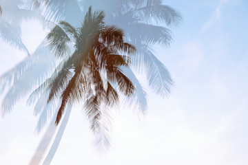 Silhouette palm tree with double exposure effect in vintage filter (background)