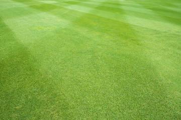 grass of sport field