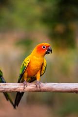 Cockatoo photos, royalty-free images, graphics, vectors & videos