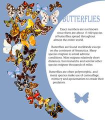 Border from butterflies. Hand drawn vector illustration. Russian butterflies.
