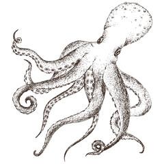 Vector sea life octopus