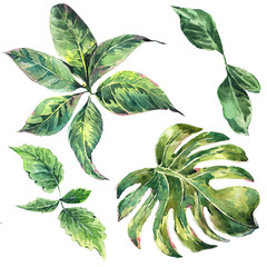 Set et of exotic watercolor green tropical leaves