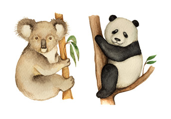 Watercolor Koala and Panda sitting on the tree.