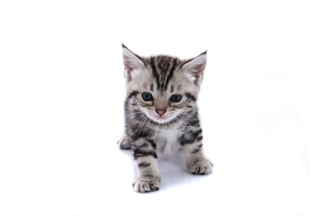 Cute kitty isolated