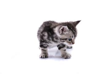 Cute kitty isolated