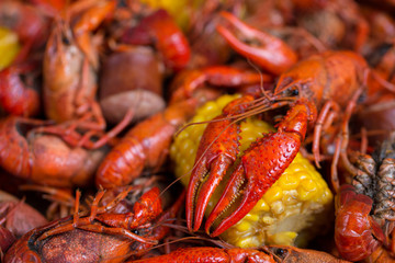 Boiled Crawfish and Corn on the