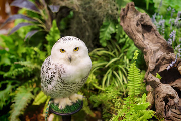 white snowy owl at the garden