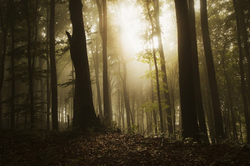 sun rays in forest in summer