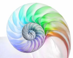 Aluminium Prints Spiral Nautilus in Regenbogenfarben