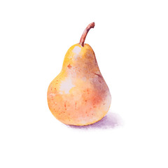 Hand painted watercolor pears, yellow pear, whole pear