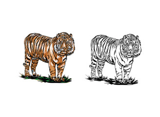 Bengal tiger  Vector illustration