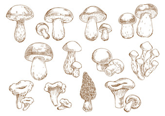 Edible mushrooms sketch drawing icons