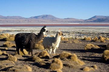 Amazing natural scenery: Lagoons of Altiplano plateau, Bolivia