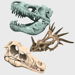 Three skulls of ancient large animals