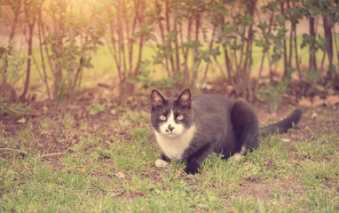 Soft photo of a cat in park