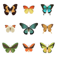 Colorful tropical butterflies collection