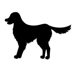 Silhouette of golden retriever isolated on white background