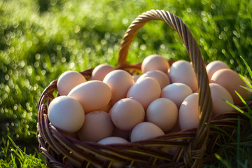 Wooden Basket Full of Eggs