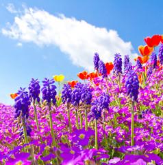 Wall Mural - Bunte Gartenblumen im Frühling