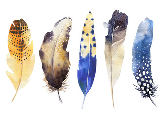 Hand drawn watercolor feather set. Boho style. illustration isol