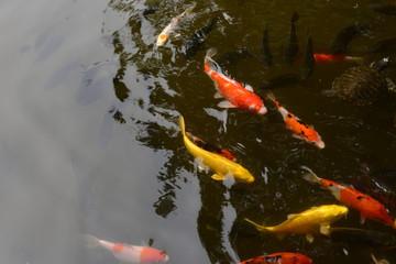 Some of the carp already weigh ten kilograms.