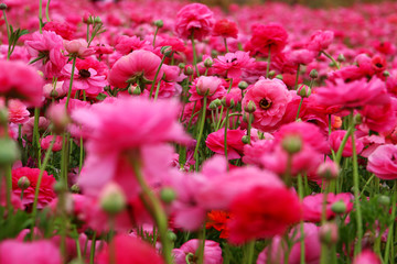 dreamy photo with low angle of spring flowers.