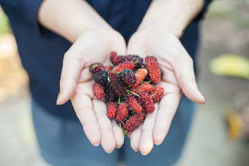 mulberry in hand