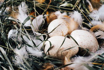 Natural unpainted chicken eggs with bright feathers on the dry green grass in the nest on a wooden dark background of vintage boards close-up , easter eggs closeup