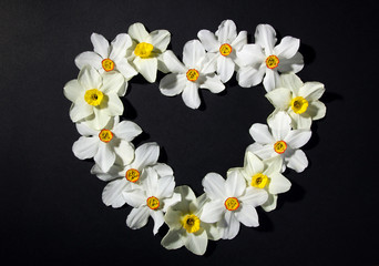 fragrant white daffodils lined on a black background in the shape of a heart