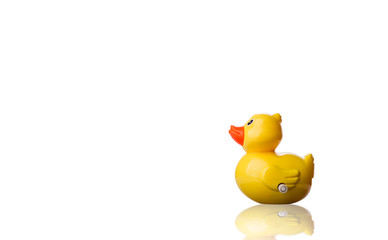 Yellow duck toy