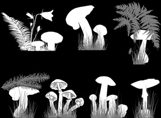 white mushrooms in grass collection