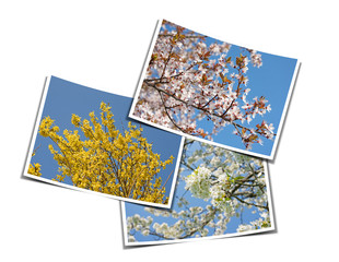 Frühling, Blüten, Fotos, Collage